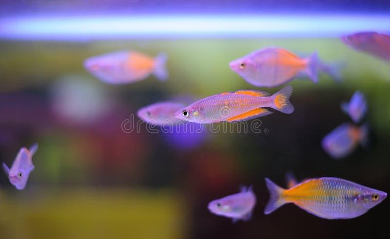 Bei pesci. fotografie stock