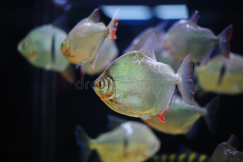Bei pesci. immagine stock