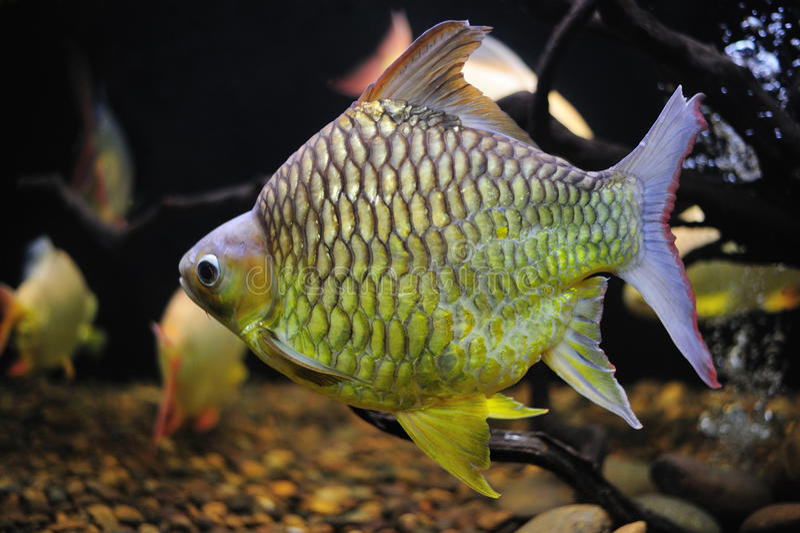 Bei pesci. fotografia stock