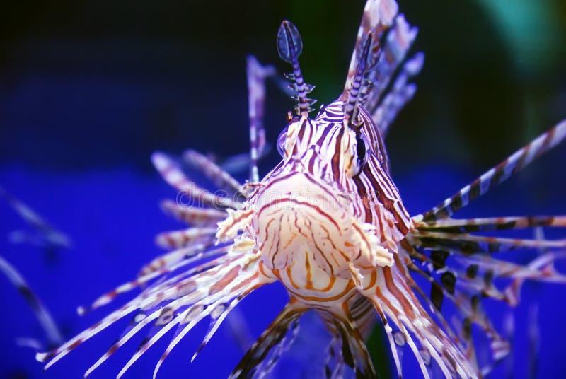 Bello pesce fotografia stock