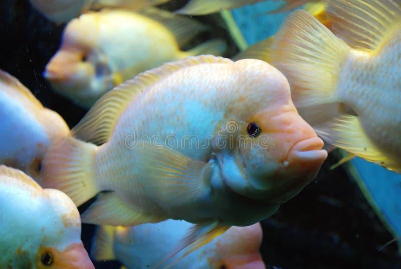 Bello pesce fotografie stock libere da diritti