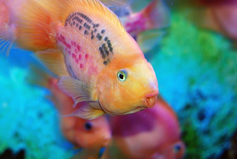 Bello pesce immagini stock