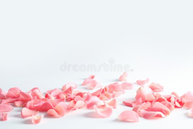 Bei petali rosa sparsi immagini stock