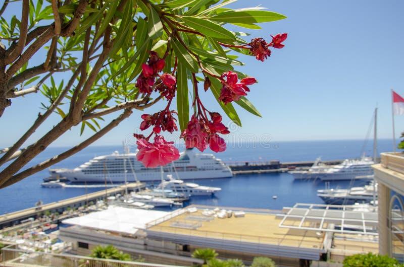 Bei porti con molti yacht nel Monaco e giardini pieni dei fiori immagini stock libere da diritti