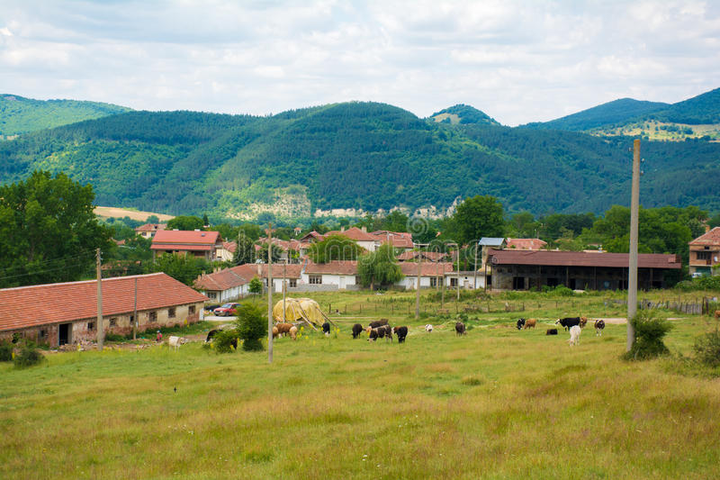 Bei punti di vista rurali delle case e delle mucche in immagini stock libere da diritti