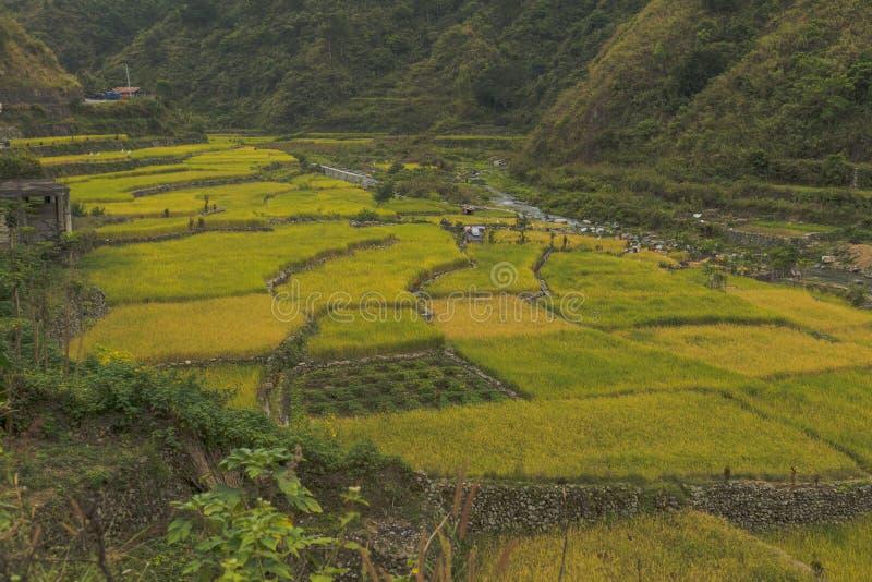 Bei terrazzi in Banaue, Filippine del riso fotografia stock libera da diritti