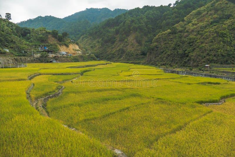 Bei terrazzi in Banaue, Filippine del riso immagine stock libera da diritti