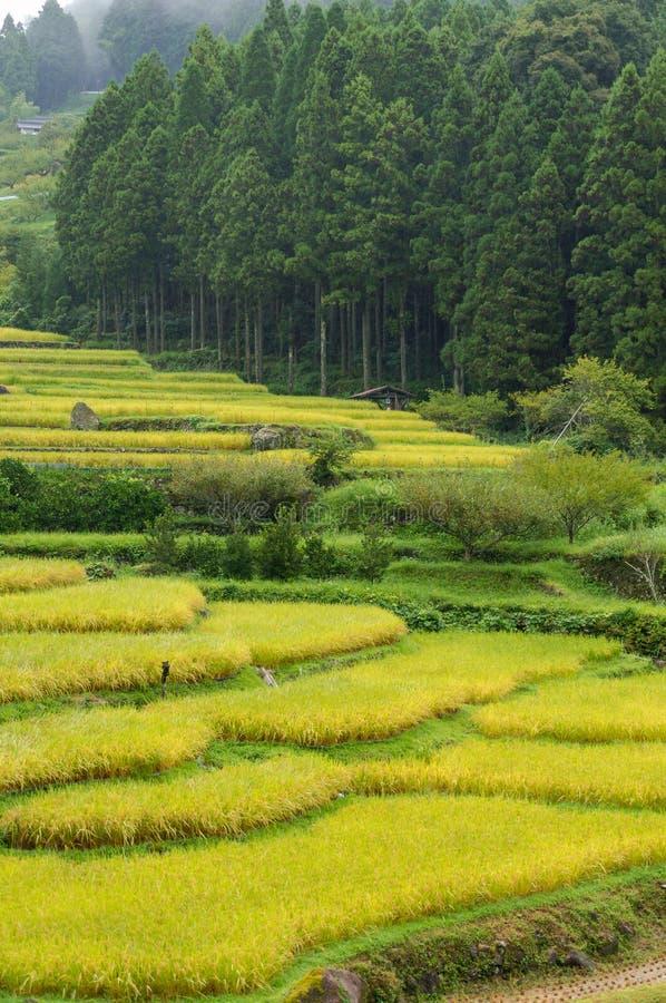 Bei terrazzi del riso con la foresta sui precedenti fotografie stock