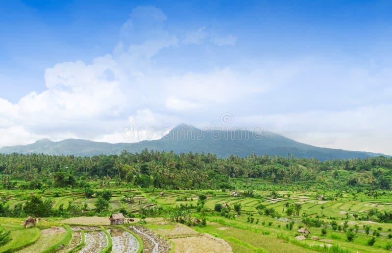 Bei terrazzi e montagne del riso immagine stock libera da diritti