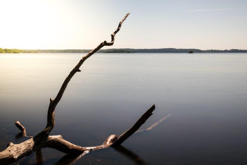 Bei tronco di albero/ramo morti che risiede in un lago immagini stock libere da diritti