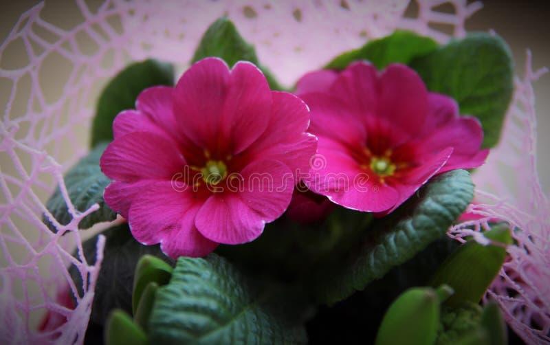 Bei tulipani arancioni fotografia stock immagine di for Tulipani arancioni