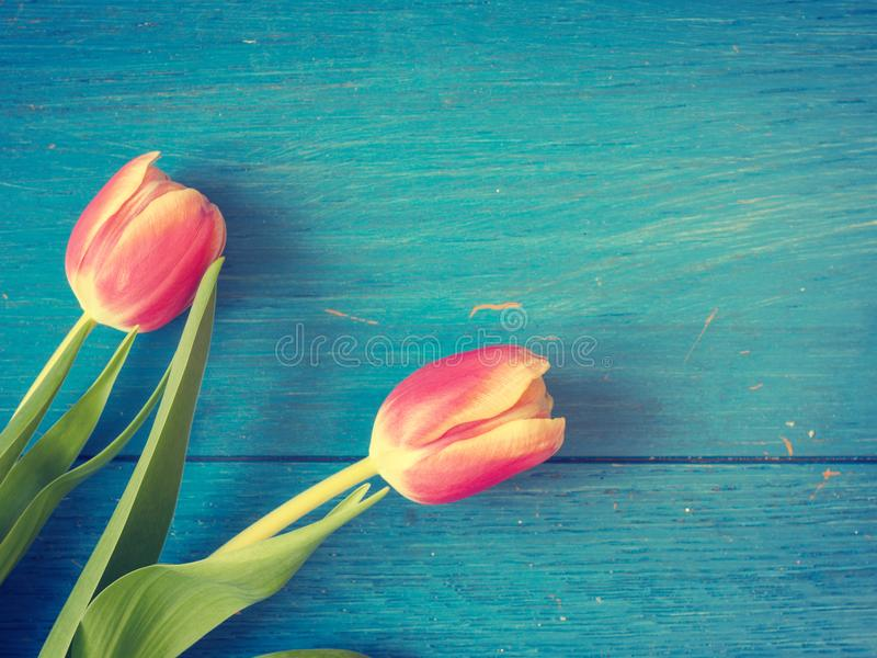 Bei tulipani, fondo di primavera immagini stock