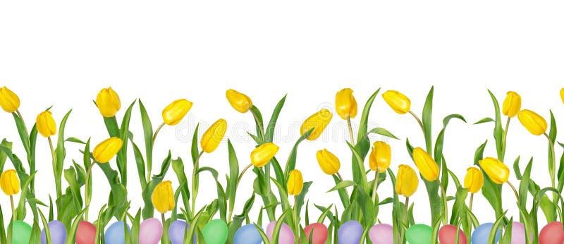Bei tulipani gialli vivi sui gambi lunghi con le foglie verdi e le uova di Pasqua variopinte nel modello senza cuciture immagine stock libera da diritti