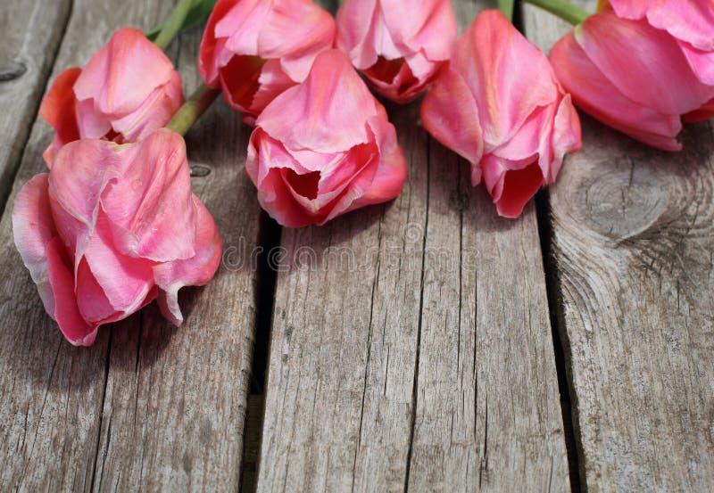 Bei tulipani rosa nelle goccioline di rugiada fotografia stock libera da diritti