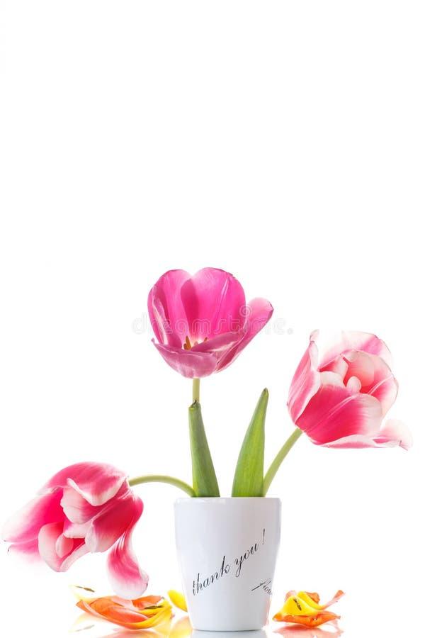 Bei tulipani in un vaso con ringraziamento fotografie stock libere da diritti