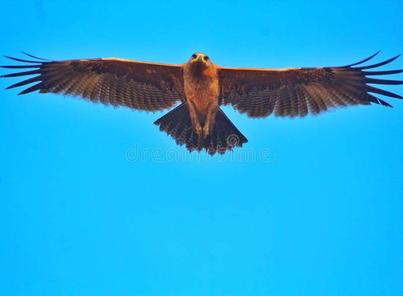 Bei uccelli del Bangladesh con il tempo di Nutural fotografie stock libere da diritti