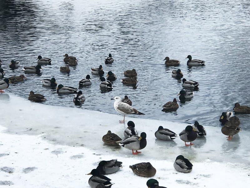 Bei uccelli selvaggi in un paesaggio urbano immagini stock