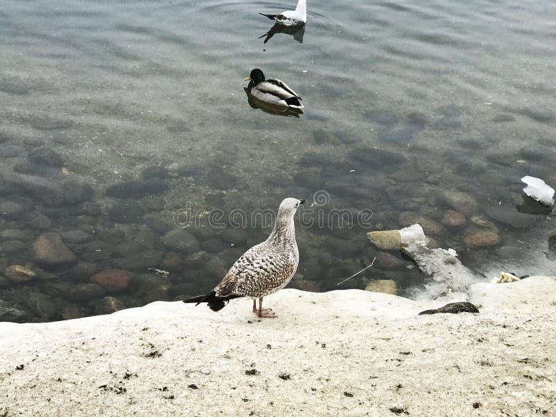Bei uccelli selvaggi in un paesaggio urbano immagini stock libere da diritti