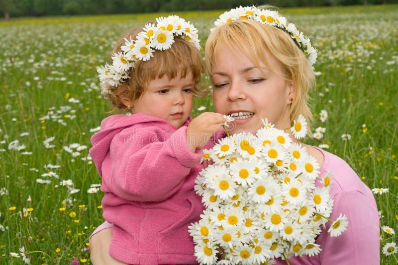 Bei wildflowers fotografia stock