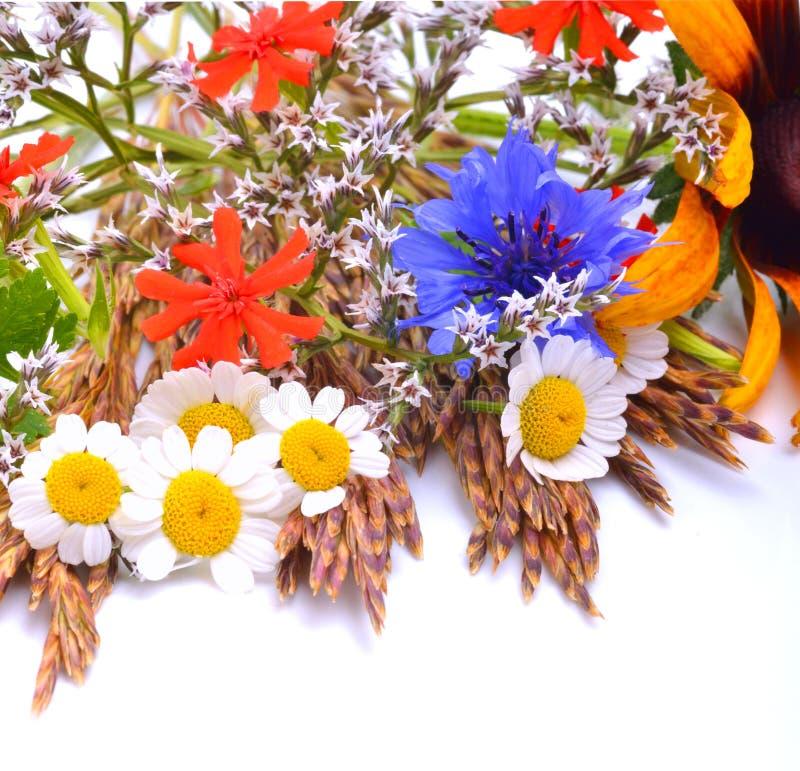 Bei wildflowers, camomille, crisantemi, fiordaliso fotografie stock libere da diritti