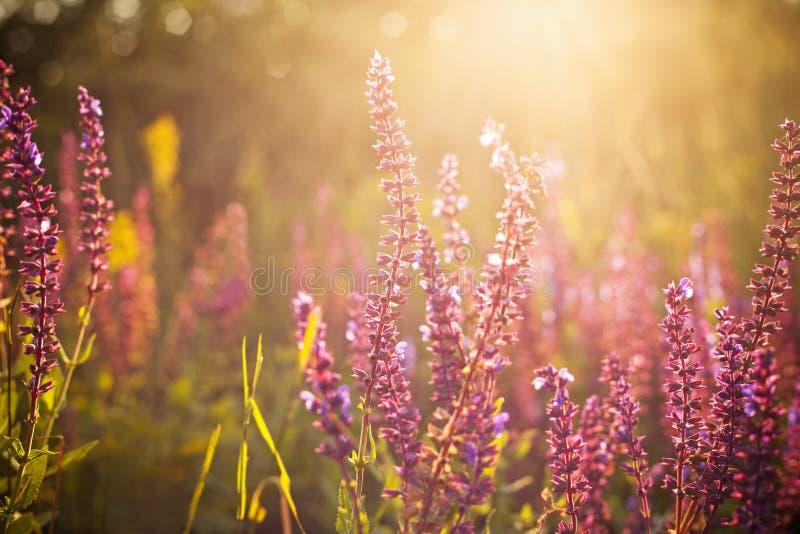 Bei wildflowers della molla fotografie stock libere da diritti