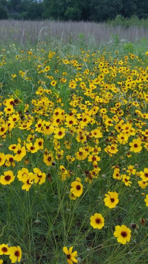 Bei wildflowers della molla! fotografie stock