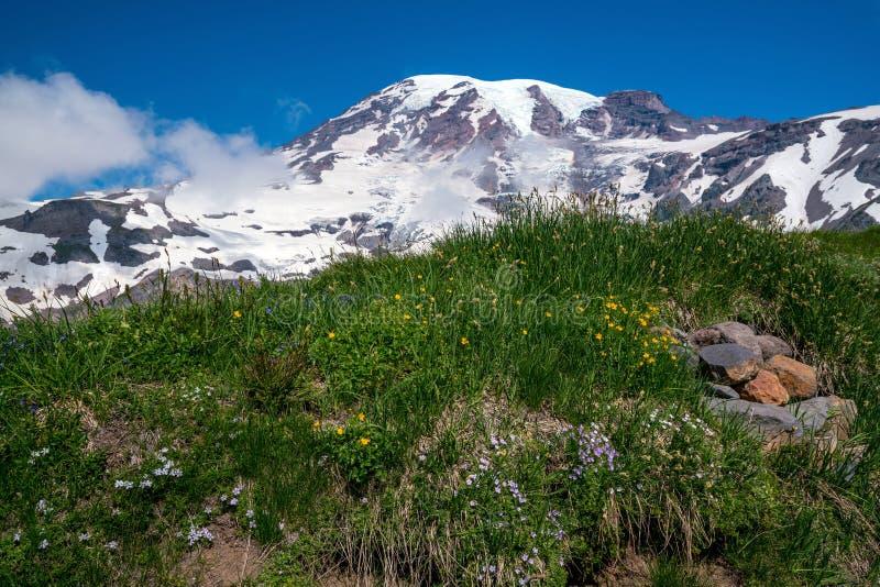 Bei wildflowers e monte Rainier, Stato del Washington immagine stock libera da diritti