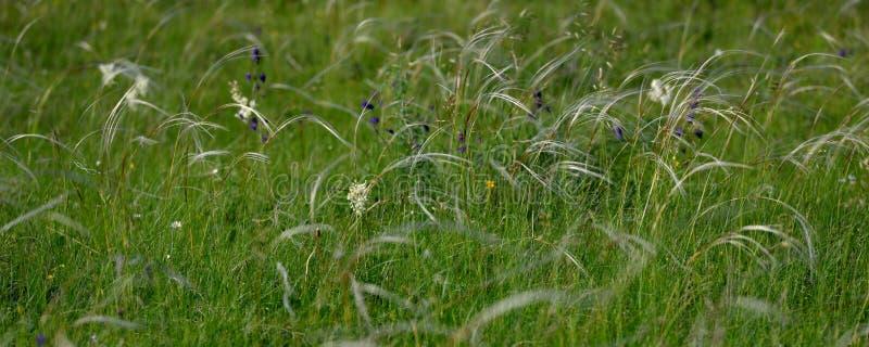 Bei wildflowers in un campo in primavera fotografie stock