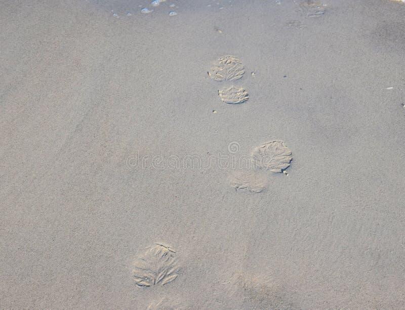 Beide Abdrücke der Füße auf dem Sandstrand stockfotos