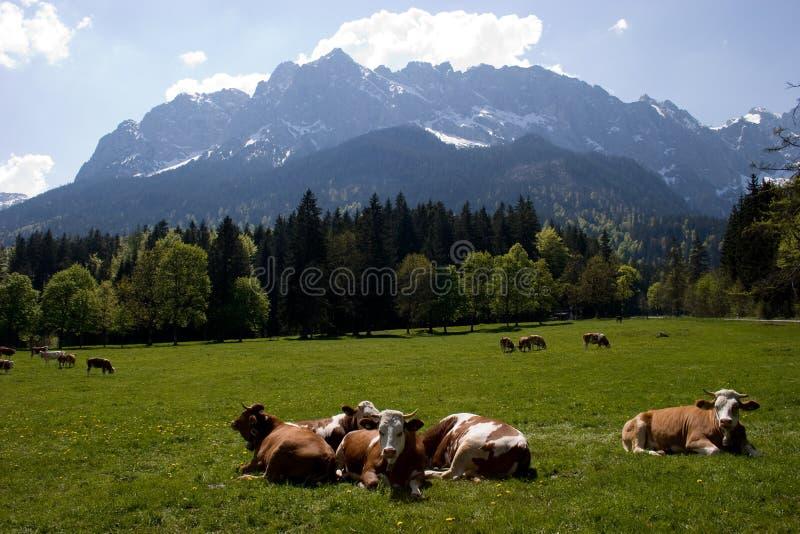 Beierse Alpen royalty-vrije stock foto