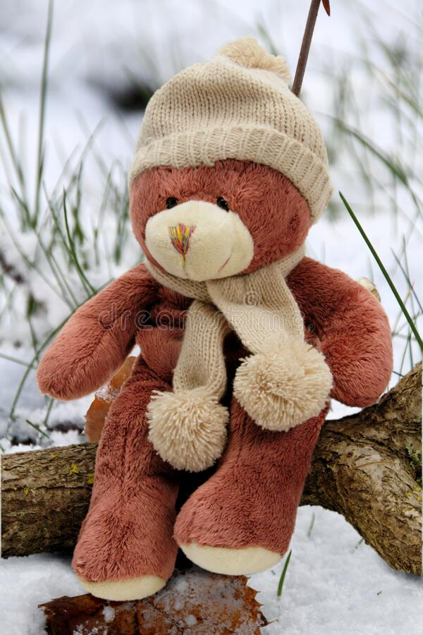 Beige And Brown Bear Plush Toy On Brown Branch During Day Time Free Public Domain Cc0 Image