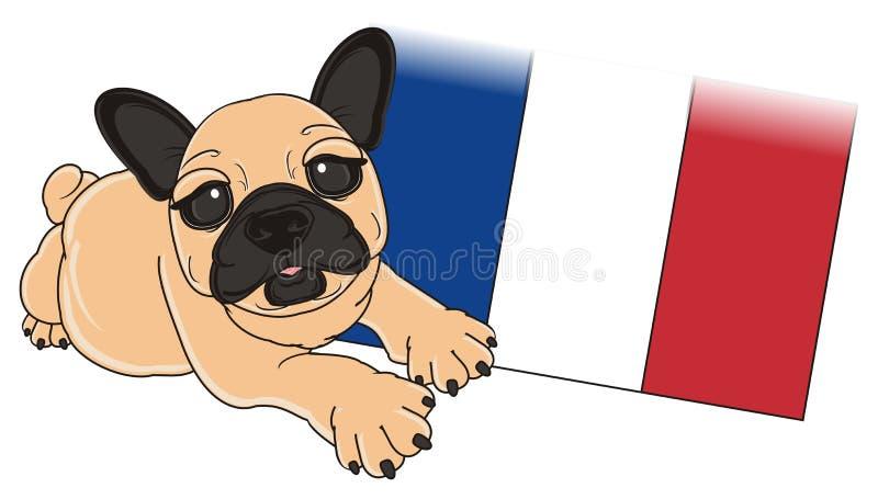 Beige bulldog with flag. Puppy of beige french bulldog lying near the French flag royalty free illustration