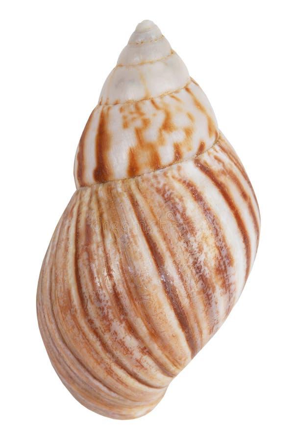 Beige buntes Shell lizenzfreies stockfoto