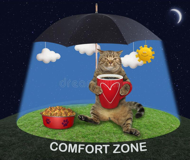 Cat lying under umbrella stock images
