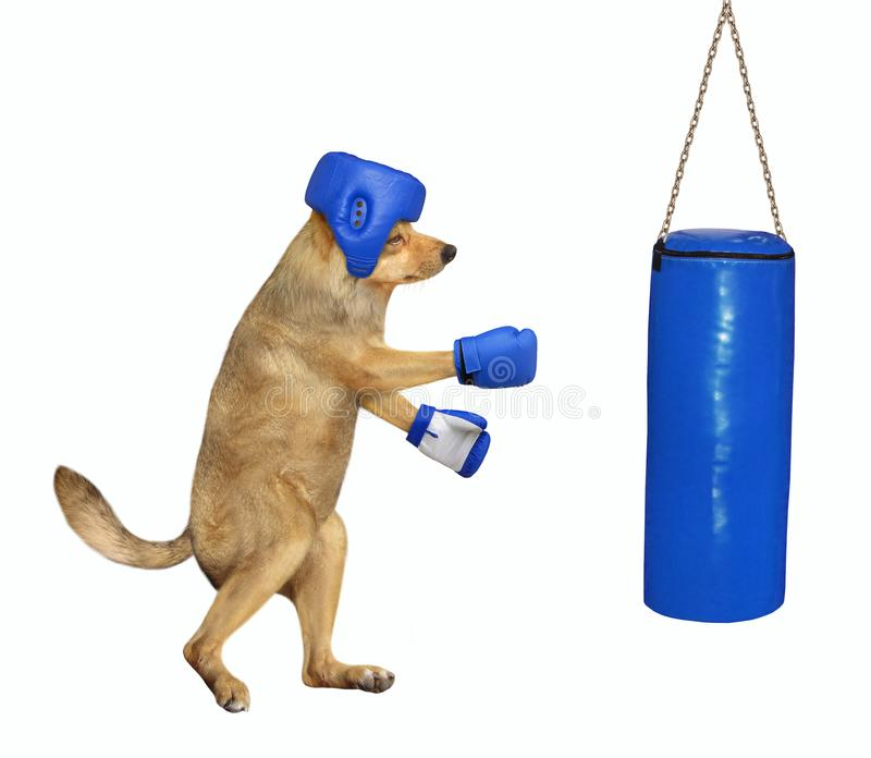 Dog boxer hitting punching bag 2 stock photography