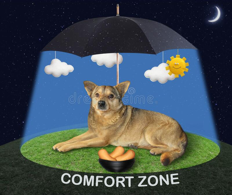 Dog lying under umbrella royalty free stock photo