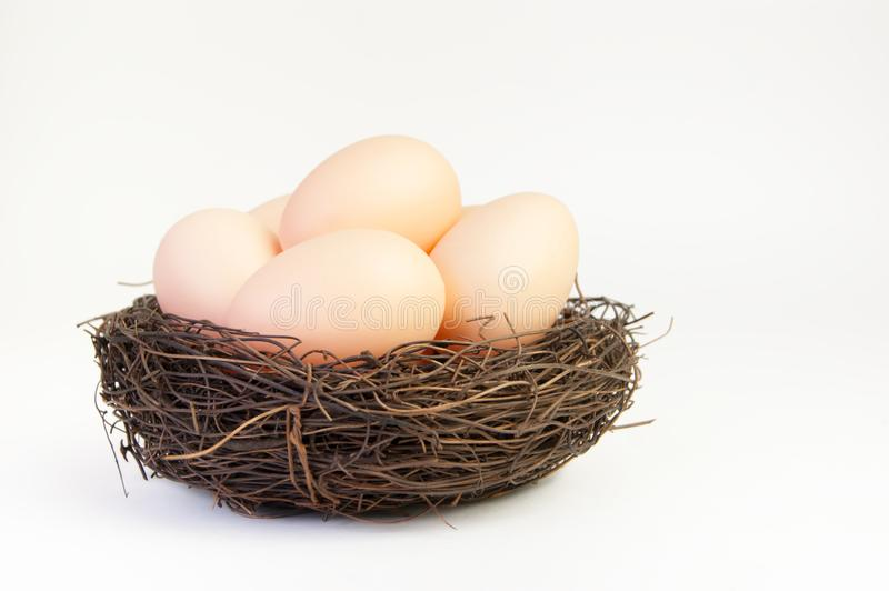 Beige eggs in the nest of branches. On a white background stock image