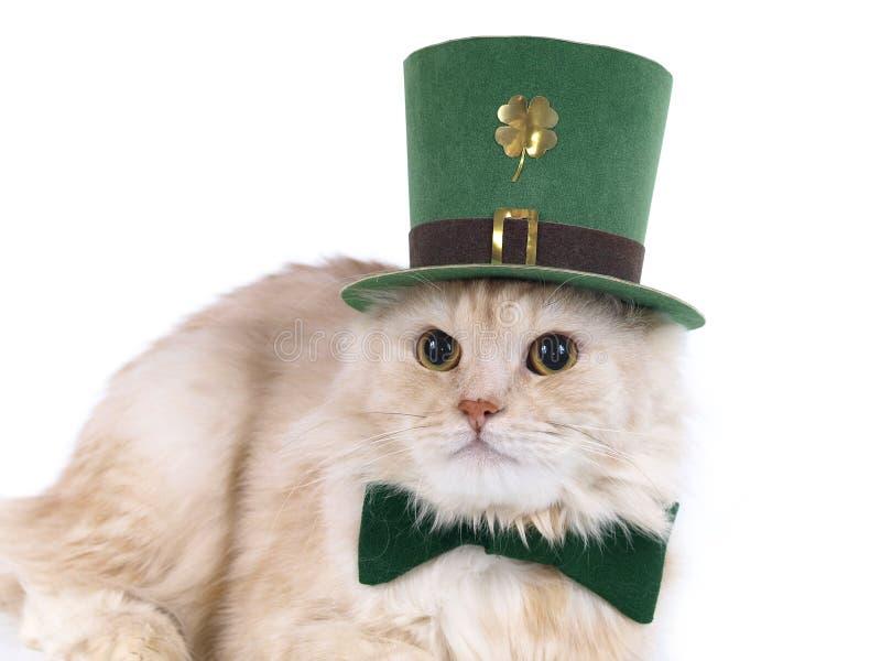 beige kattdagpatrick s st royaltyfria bilder