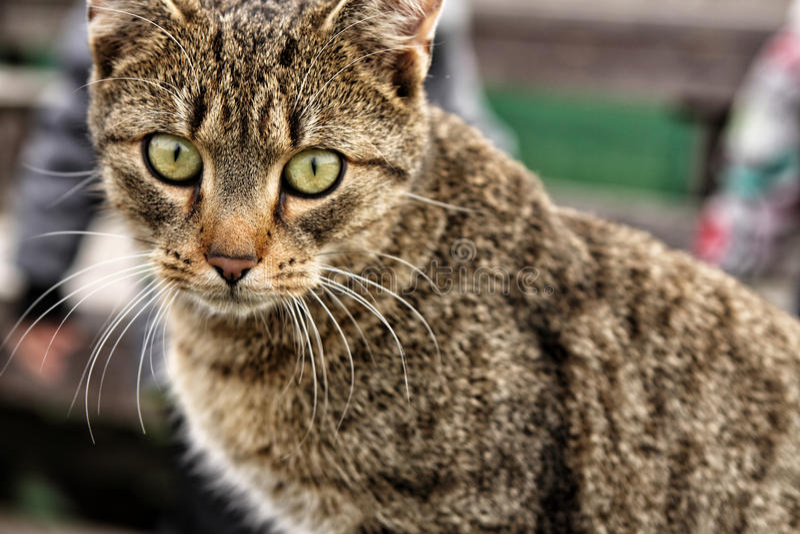 Beige Katzenkopfdetail lizenzfreie stockfotografie