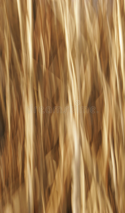 Beige Nature Blur Background royalty free stock image