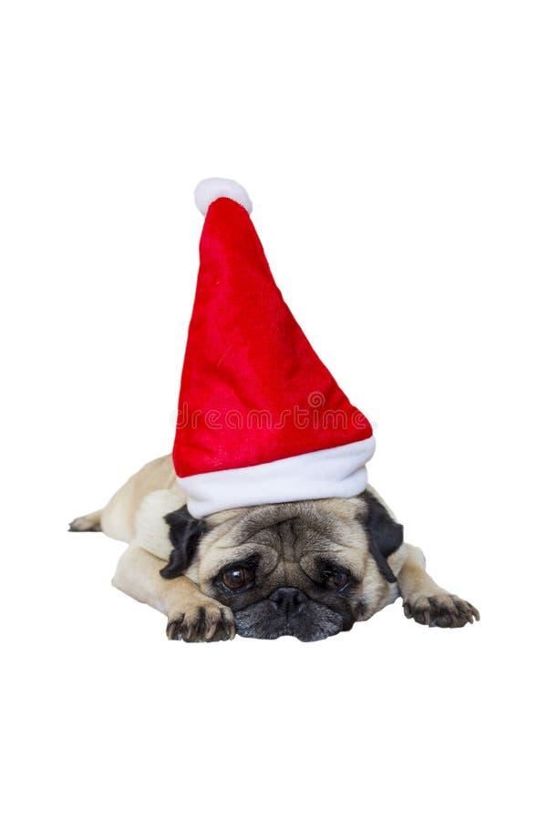 Beige Pug-tragende Weihnachtskleidung 2 stockfotos
