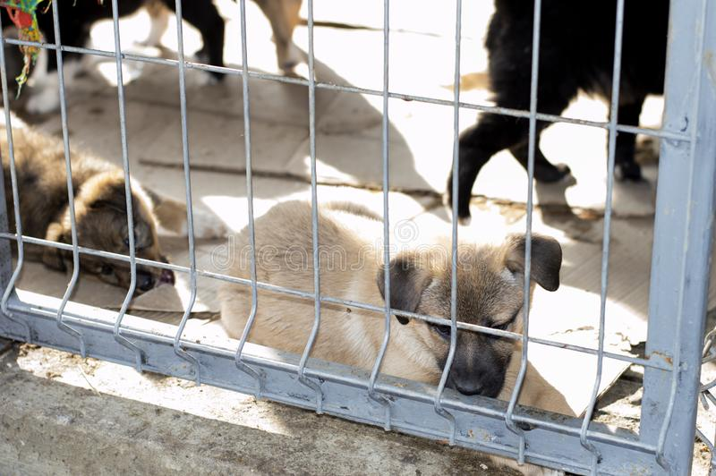 Beige puppy lies in the shelter house stock photography
