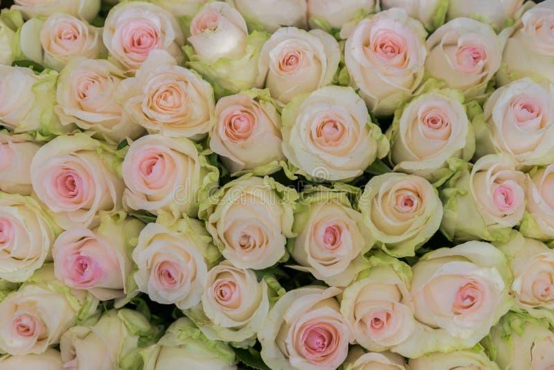 Beige rozenachtergrond Wit rozen horizontaal naadloos patroon Witte rozenregeling Een reusachtig boeket van beige rozen stock afbeeldingen