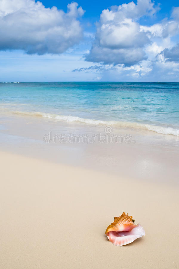 Download Beige Shell On White Sand Beach Near Blue Ocean Stock Photo - Image: 12001128