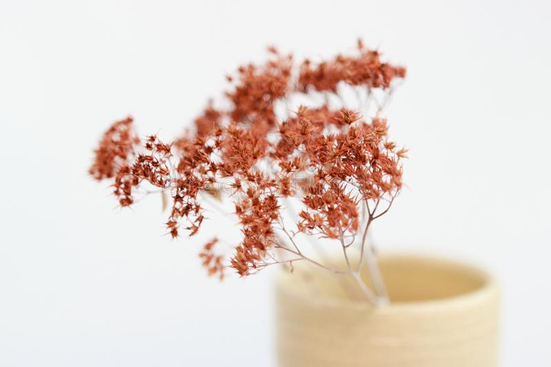 Beige vase with dried plants on a white background. minimalism style. interior decoration. royalty free stock image