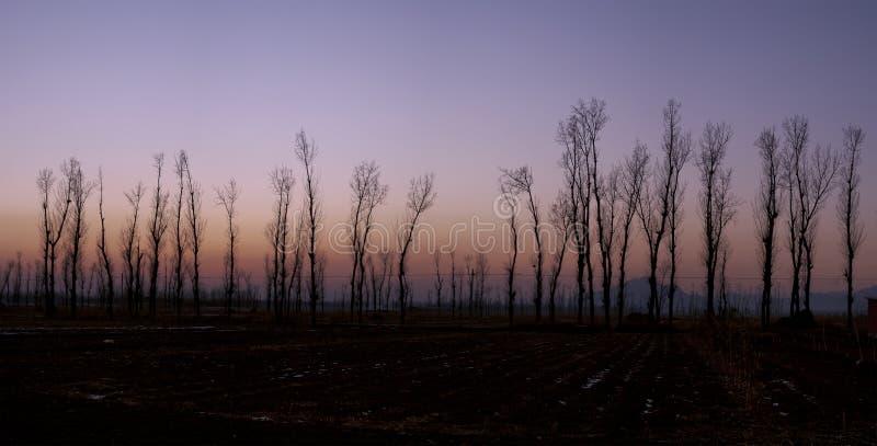 Download Beijing miyun stock photo. Image of poplar, tourism, farm - 28738500