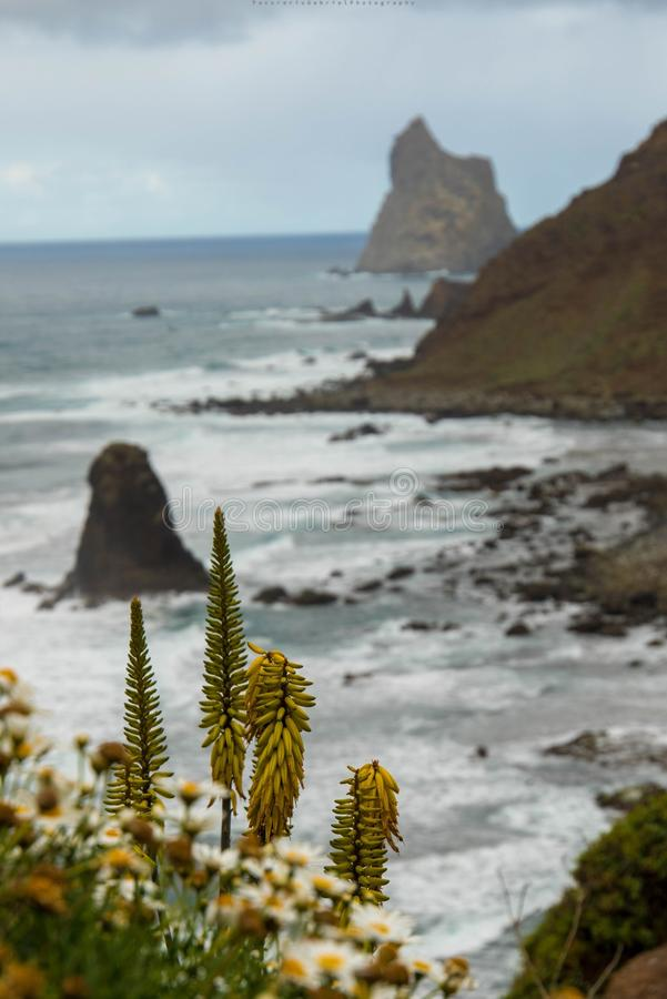 Beijo beach. Compozition on beijo beach north- side of Tenerife island stock photography