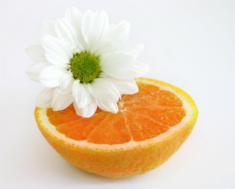 Beinahe Orange mit weißem Gänseblümchen stockbild