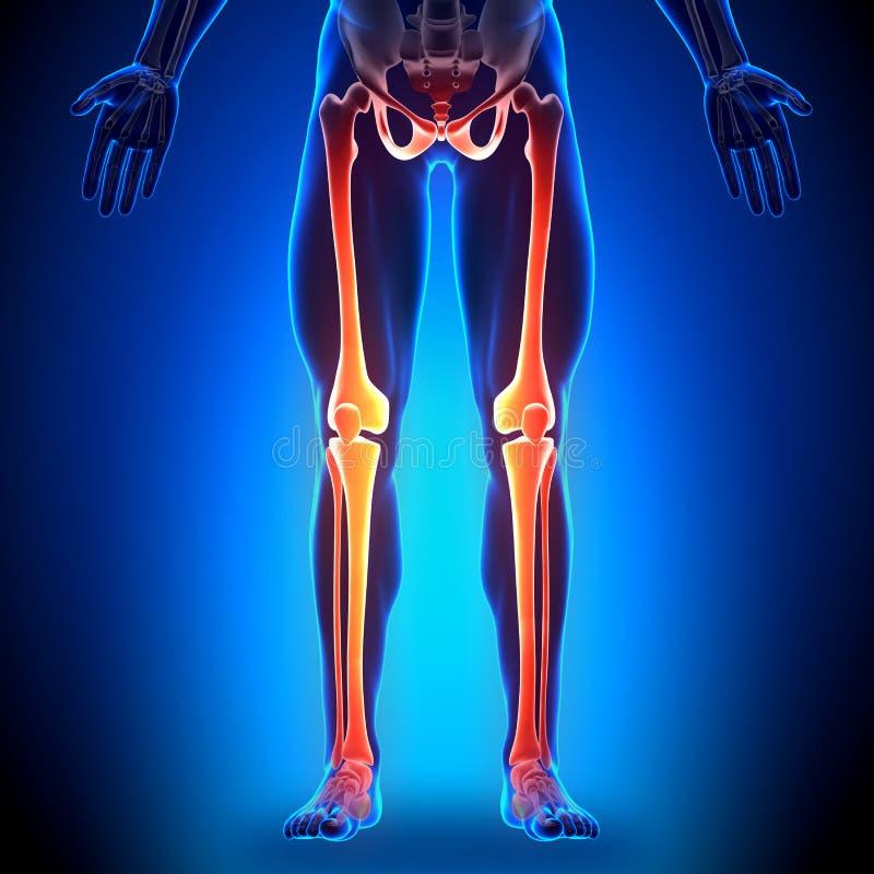 Ausgezeichnet Anatomie Knochen Praxistest Zeitgenössisch - Anatomie ...