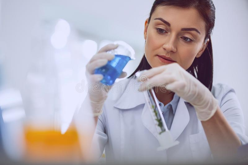 Alert female scientist doing a new test. Being inspired. Content dark-haired researcher carrying out a test while working in the lab royalty free stock photos